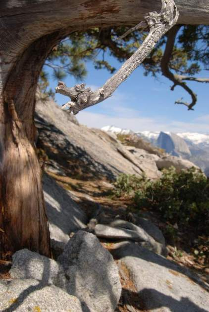 Yosemite-ElCapitan-HalfDome-Juniper-YExplore-Backpacking-DeGrazio-Apr2014