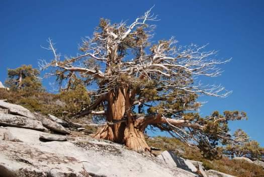 Yosemite-ElCapitan-Juniper-YExplore-Backpacking-DeGrazio-Apr2014