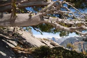 Yosemite-HalfDome-Juniper-YExplore-Backpacking-DeGrazio-Apr2014