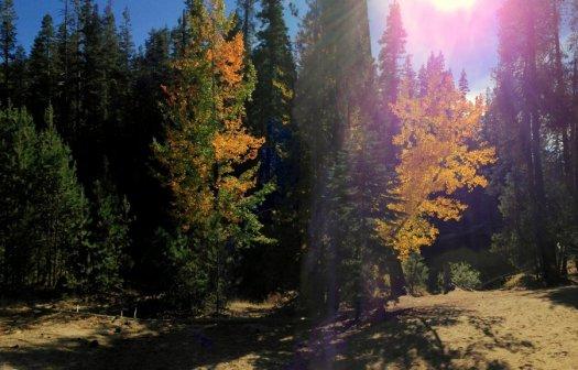 Yosemite-Aspen2-Panorama-YExplore-DeGrazio-Oct14