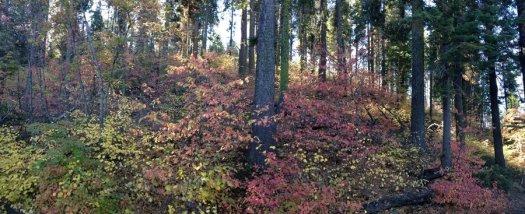 Yosemite-Dogwoods-YExplore-DeGrazio-Oct2014