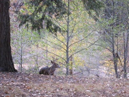 Yosemite-Wildlife-Mia-DeGrazio-Nov2014