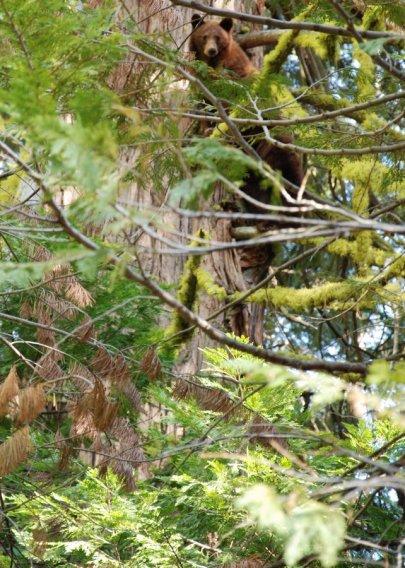 Yosemite-LostLake-Bear-YExplore-DeGrazio-JUN2010