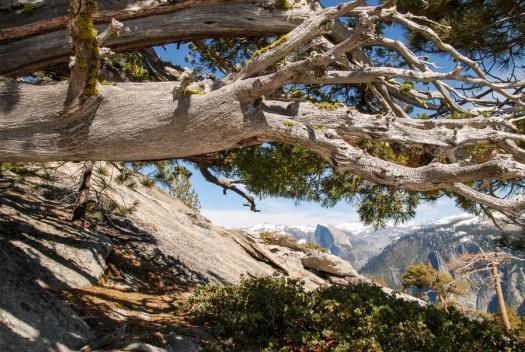 Yosemite-HalfDome-Juniper-YExplore-DeGrazio-APR2014