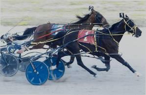 Horse-Race-Win