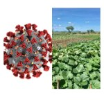COVID-19: Japan government supports 1,500 farmers with agric inputs