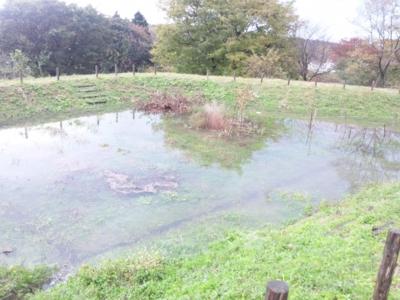 雨でプールに131121_090558.jpg
