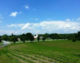 View From memorial Across Fields