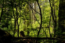 Blog86_the Woods