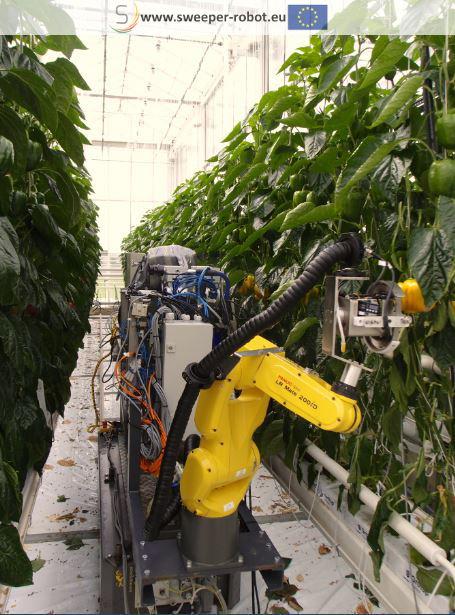 ※パプリカの自動収穫ロボットの実験風景2