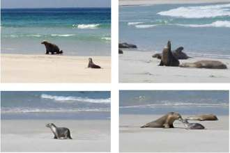 YML v/Henny Jensen visits Seal Bay on Kangaroo Island where we took a stroll on the beach with Australian sea lions
