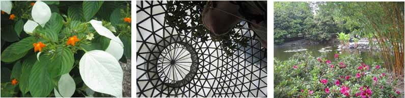 Brisbane Botanic Garden - Henny Jensen