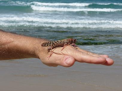 גם בחוף הים בתל-אביב (צילום: אדריאן רוזנר)