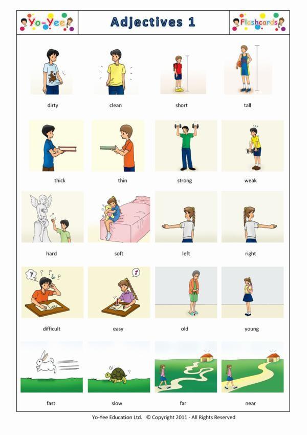 Exercises Possessive Adjectives 5 Grade