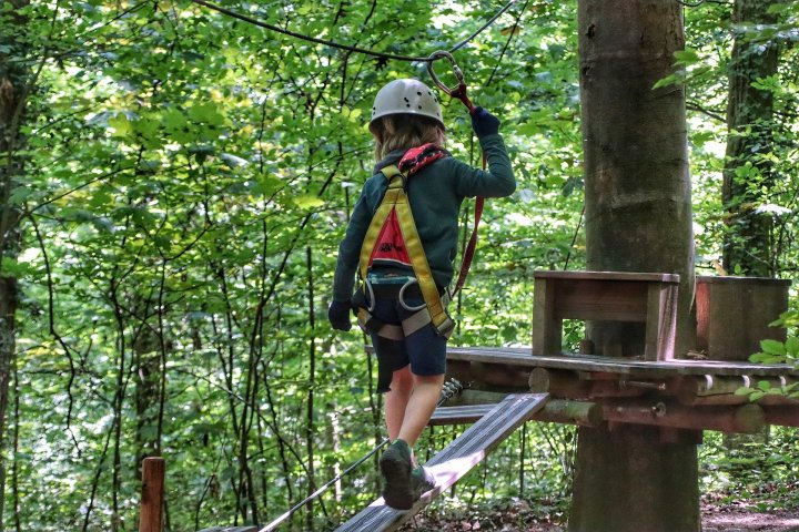 Trees in forest as person goes zip lining.