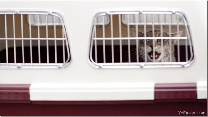 gato-kennel-viaje