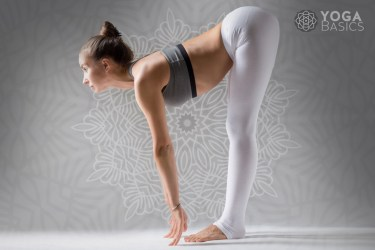 sun salutation yoga pose