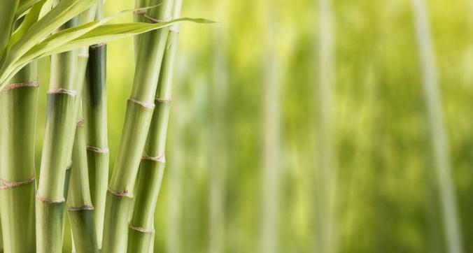 vuoto della canna di bambu