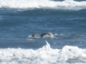 Dana took this photo of Huck swimming in the ocean in November 2011