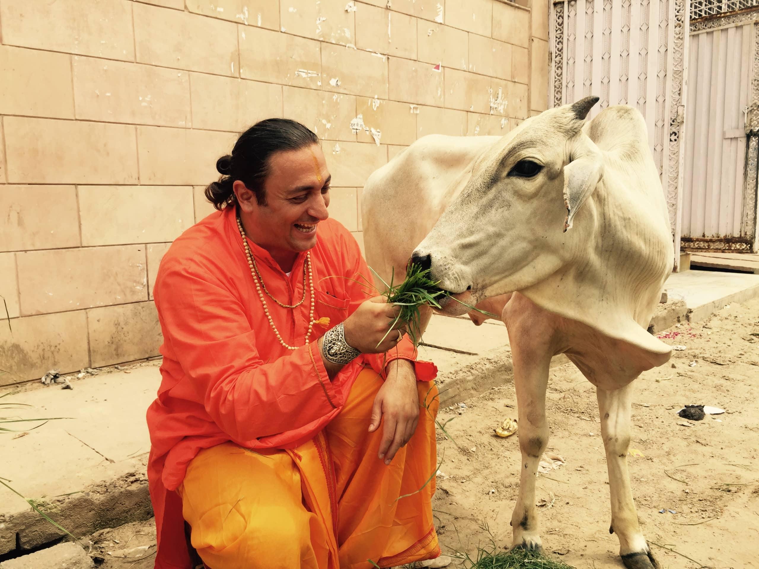 Swami Amrirananda ride e da da mangiare ad una sacra Mucca indiana | VRINDAVANA
