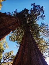 Environmentalism as a Yoga Practice - Trees