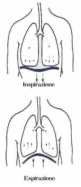 respirazione-diaframmatica-addominale
