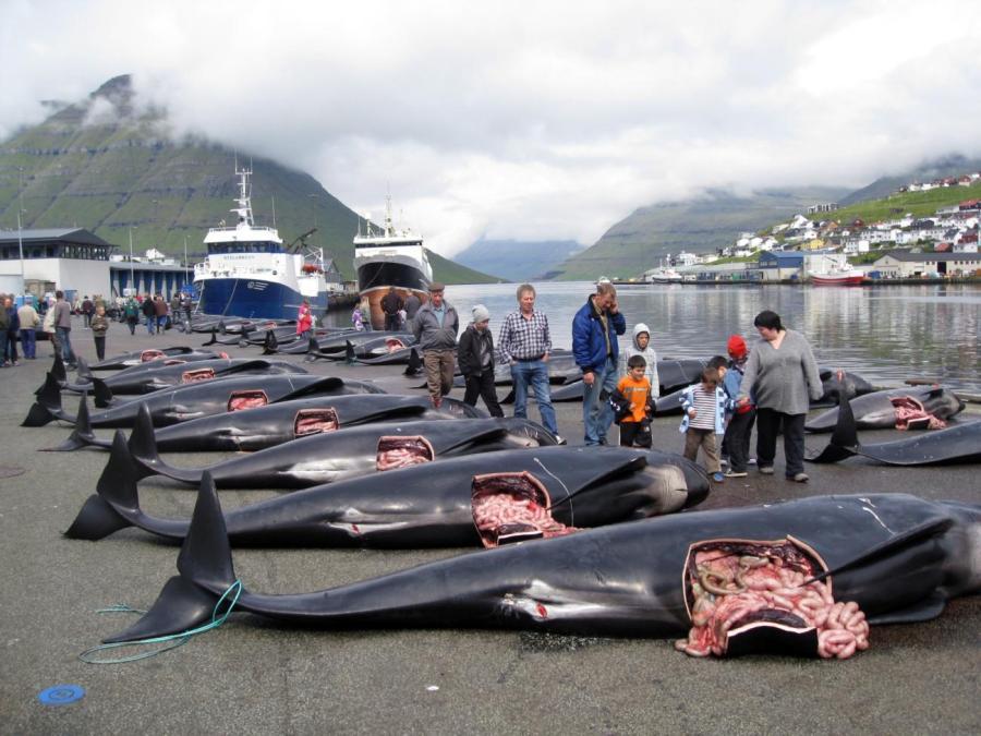 Sea Shepherd Aktion Undercover Faroerer Inseln