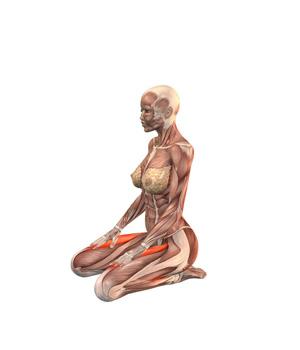 vajrasana  postura del diamante  yogateca