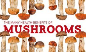 mushroom article