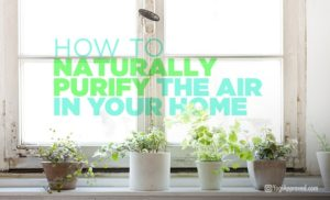 airPurify_plants_featured_image