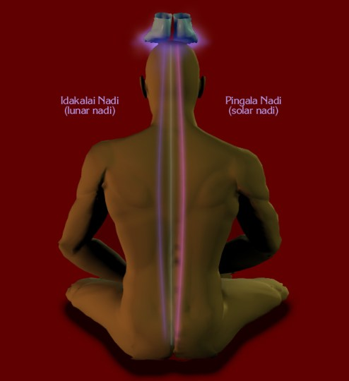 Illustraion of the primary nadis of Kriya Technique