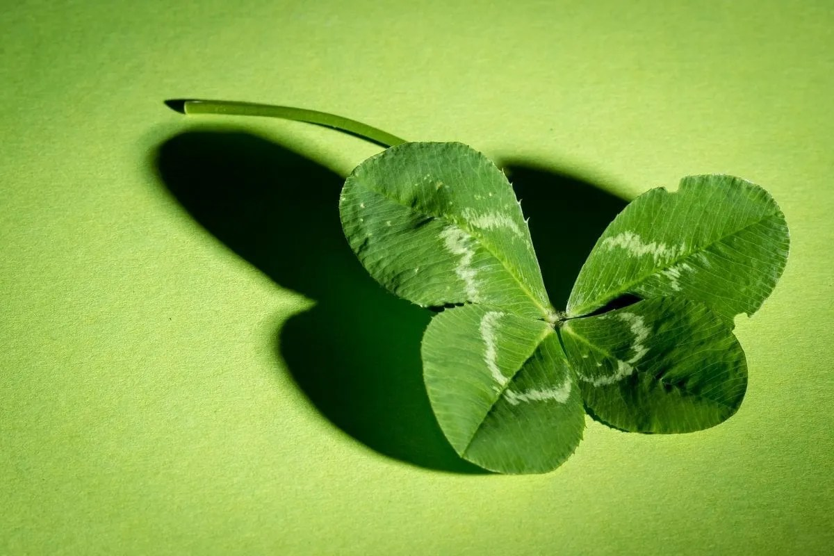 The Meaning of Luck