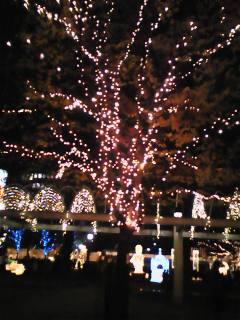 警固公園2008福岡イルミネーション