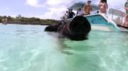 kiauliu-sala-main