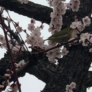 小田和正2019 3月6日(水)先輩夫婦とのオフ会開催のご報告