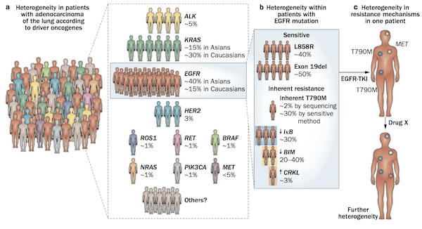 tumour heteroneity in lung adenocarcinoma  copy 2