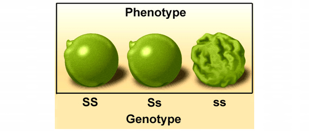 geno-phenotype
