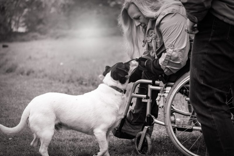 there is a wheelchair and also a dog