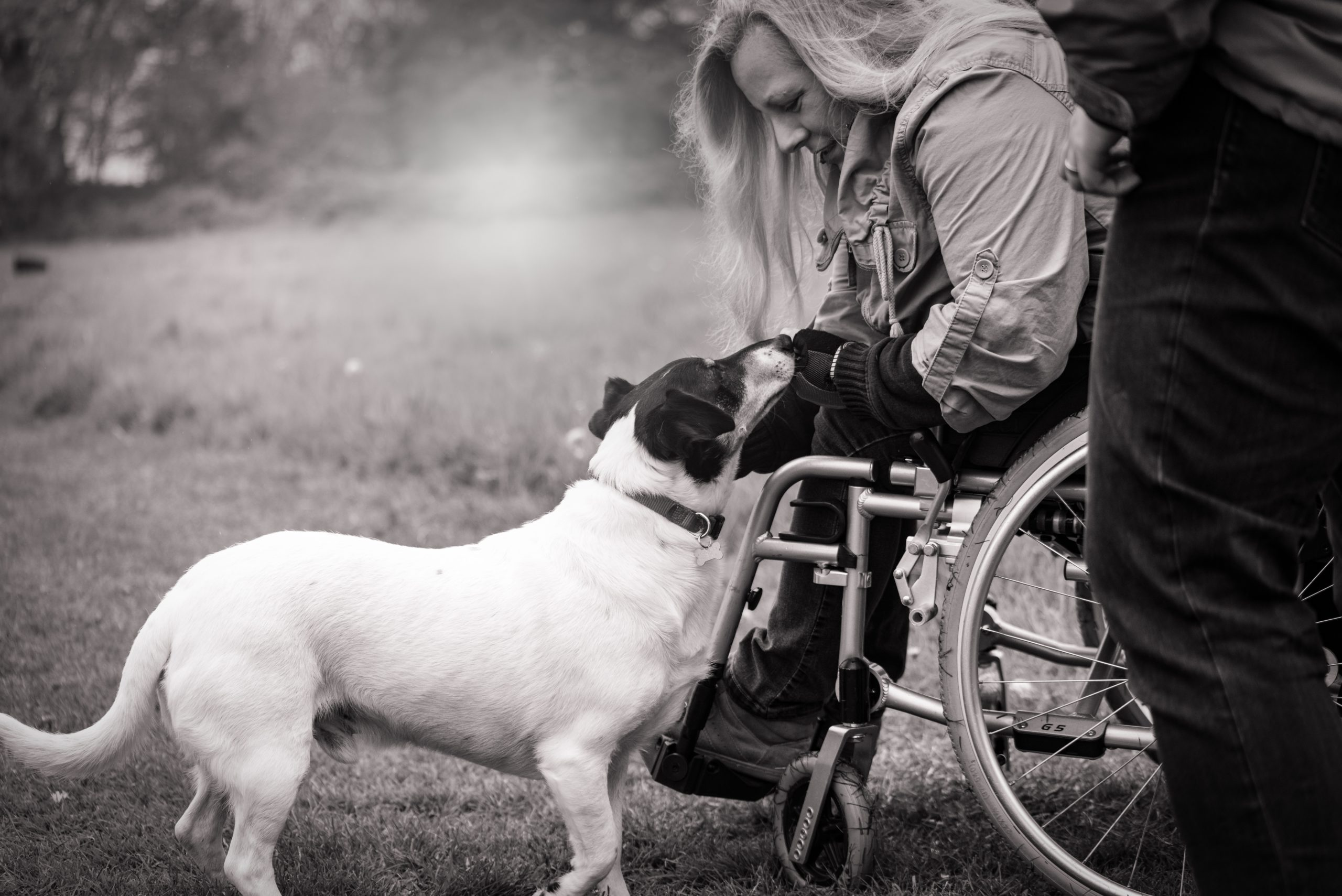 black and white photo of a light-skinned woman sitting in a wheelchair, leaning over to give attention to a small white and black dog, as they pause on their way through a field.