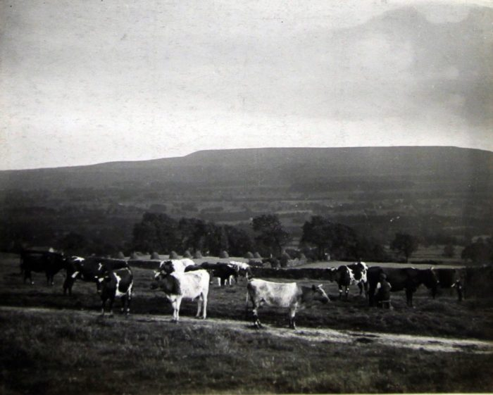 Redmire Pastures 1910. With permission of The National Archives