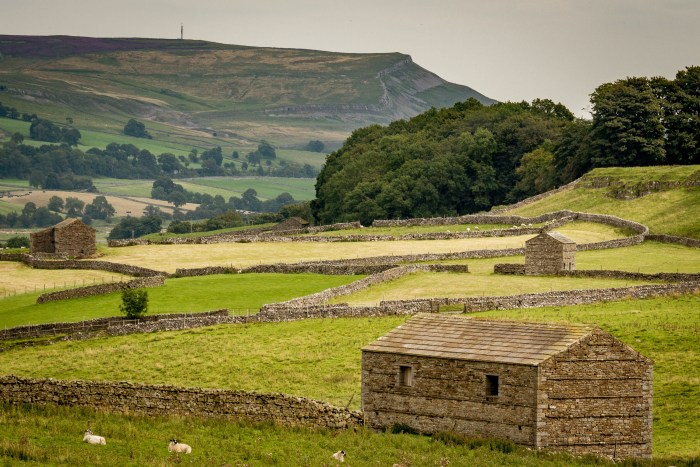 Perched on the hillside. Stone built barns and drystone walls in the fields around bainbridge