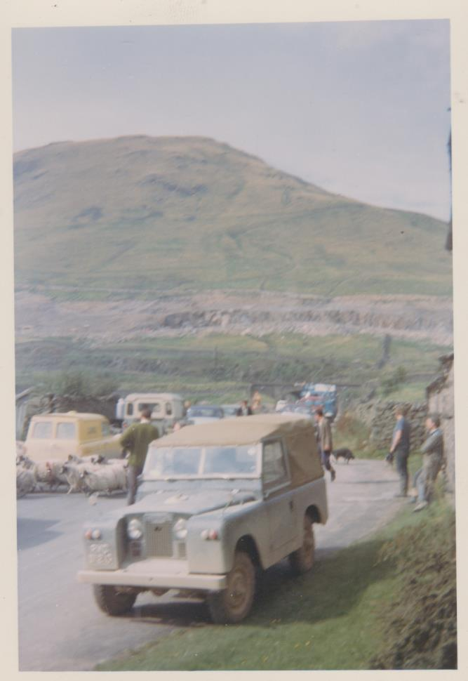 Moving sheep among the construction traffic, unknown date. Courtesy of Hilary Wilson