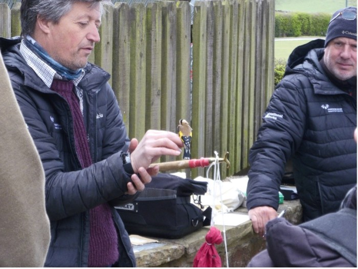 Yorkshire Dales National Park Authority wildlife officers demonstrating bird ringing for Young Rangers