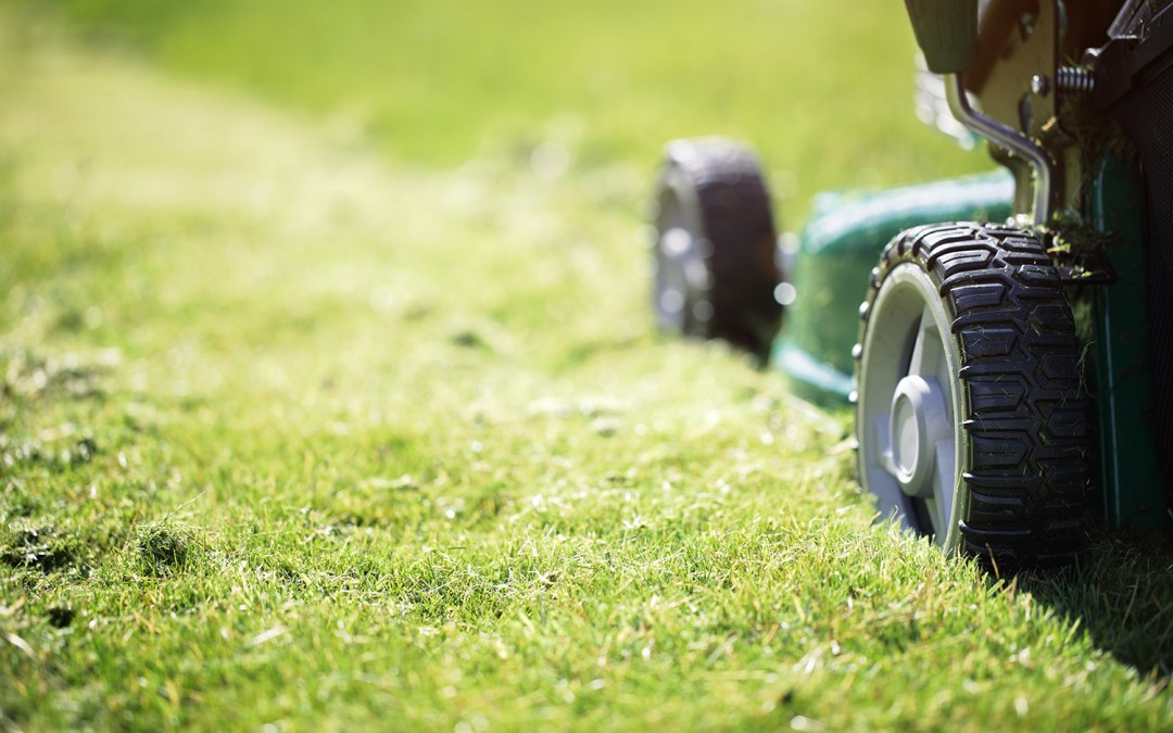 Yorkshire Housing's grass cutting services resume