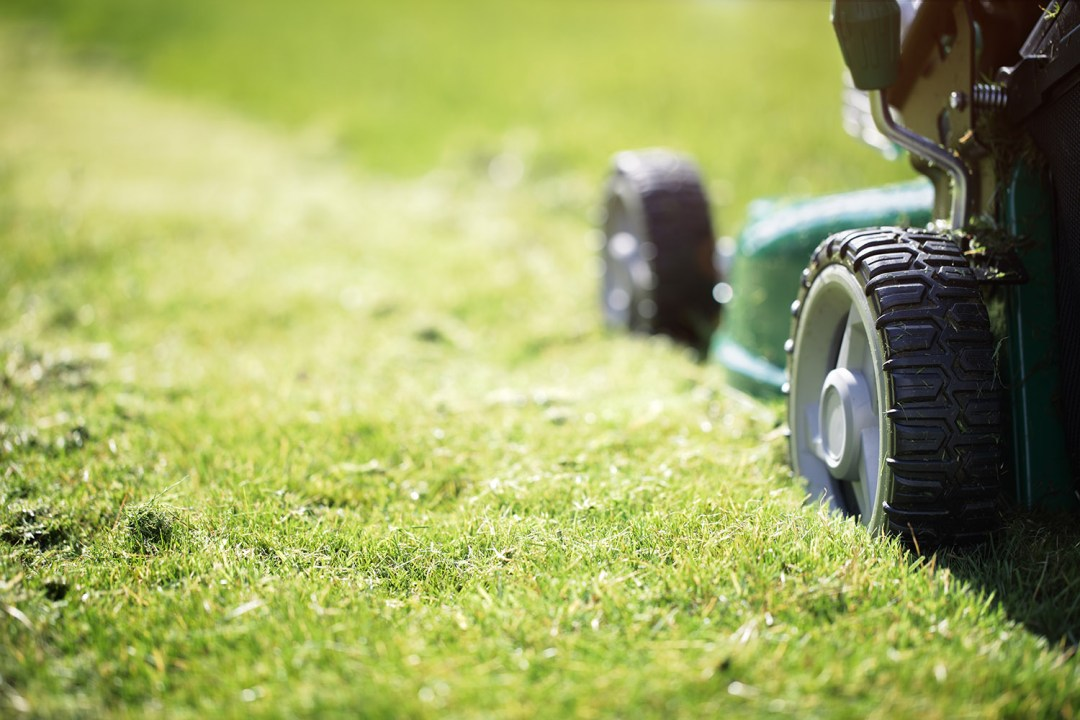 Grass Cutting Service – Website News