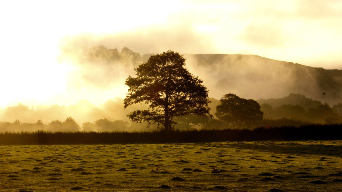Foggy Morning in Wales