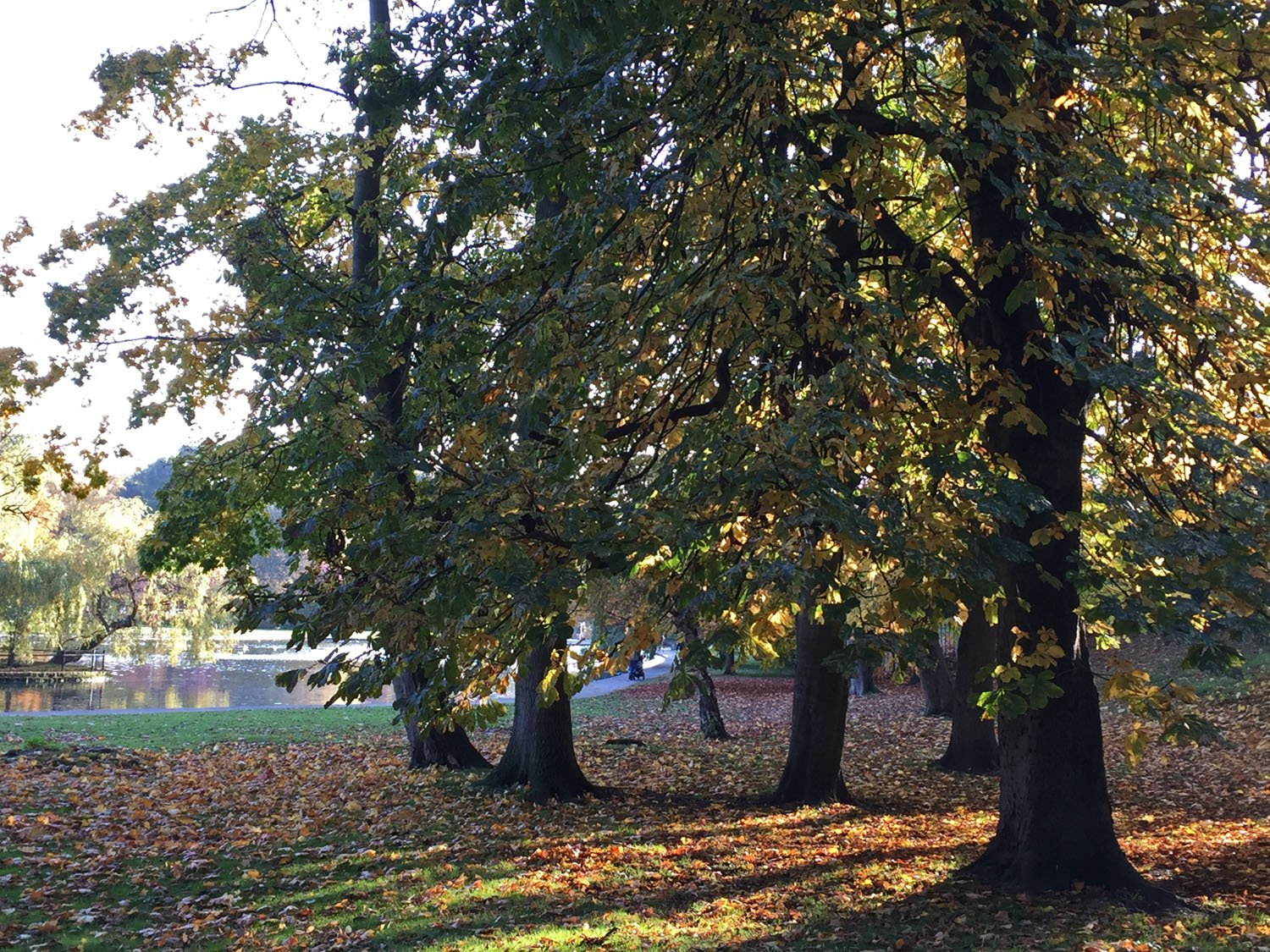 Autumn Colours - Rowntree Park and Lake - York