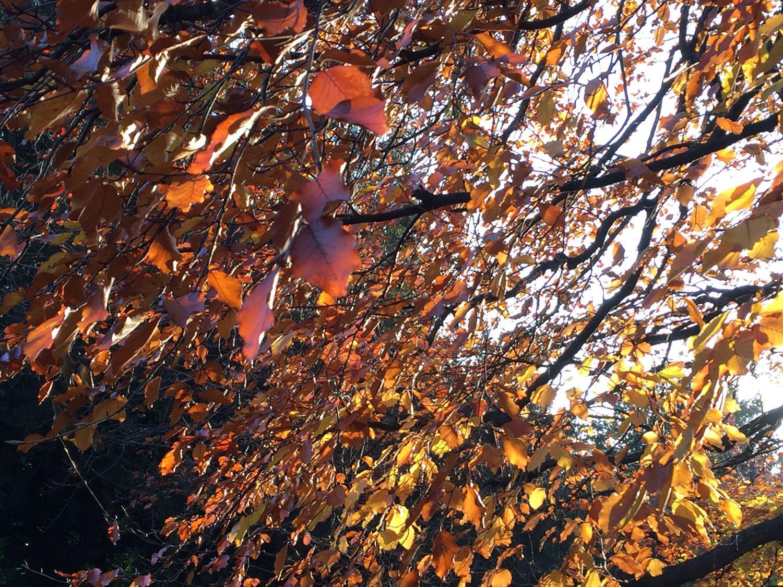 Autumn Colours - York