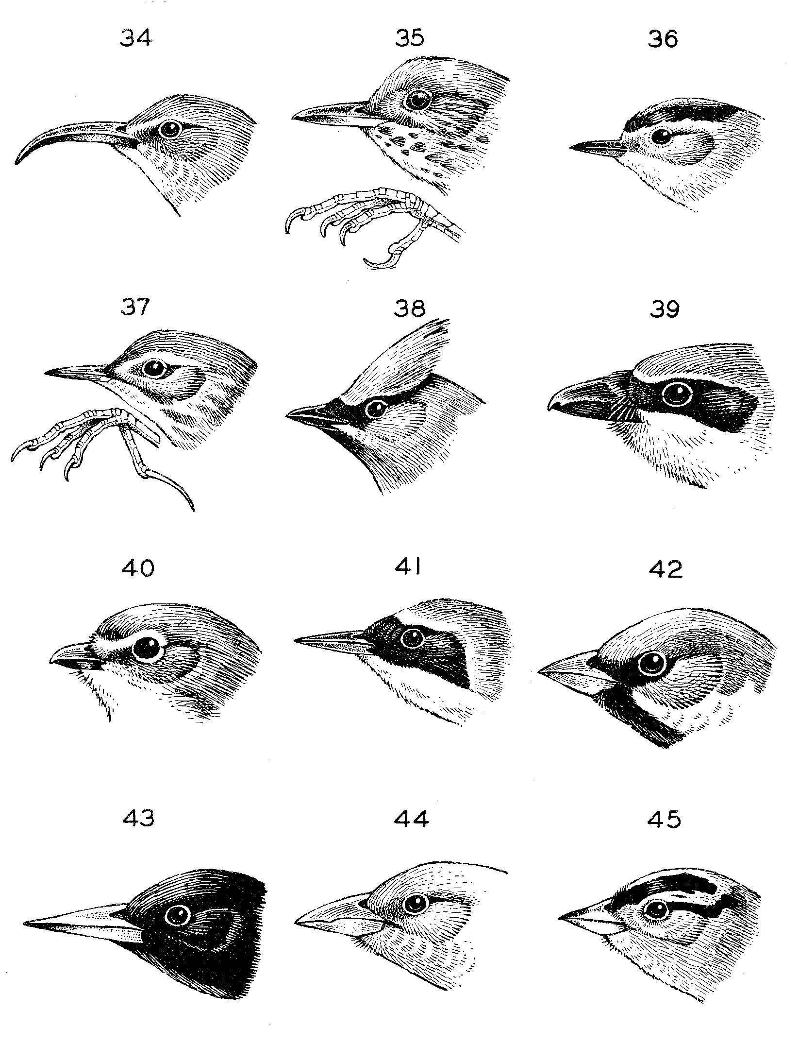 Birds Of Yosemite National Park Appendix I