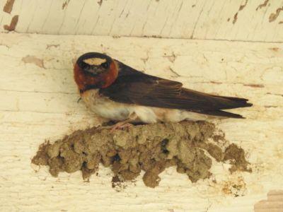 Vogels nest bij Western Holiday Lodge